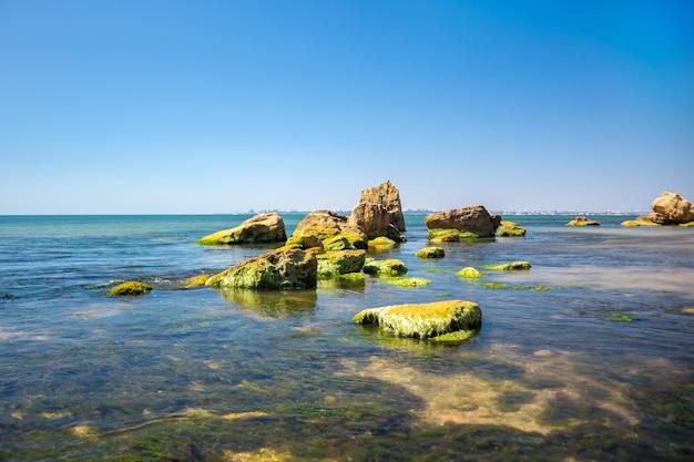 Stein bedeckt mit grünalgen im meer mit himmelblau