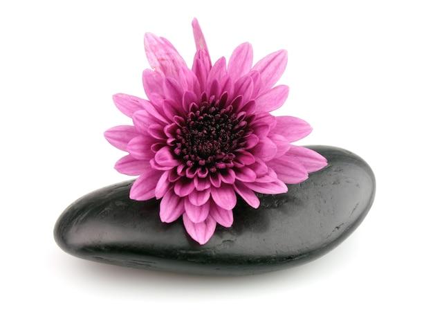 Steine mit einer blume einer rosa chrysantheme