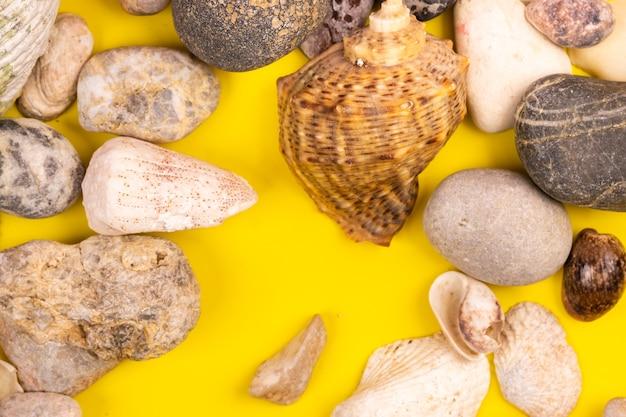 Steine und muscheln auf gelbem hintergrund.marinethema
