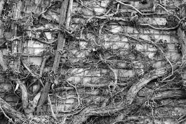 Steine wand mit trockenen zweigen