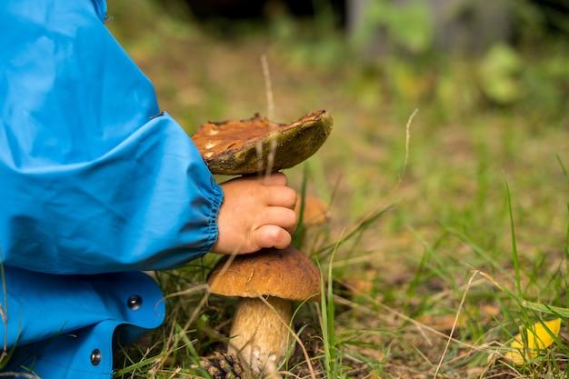 Steinpilz edulis. steinpilz wächst im wald. foto in hoher qualität