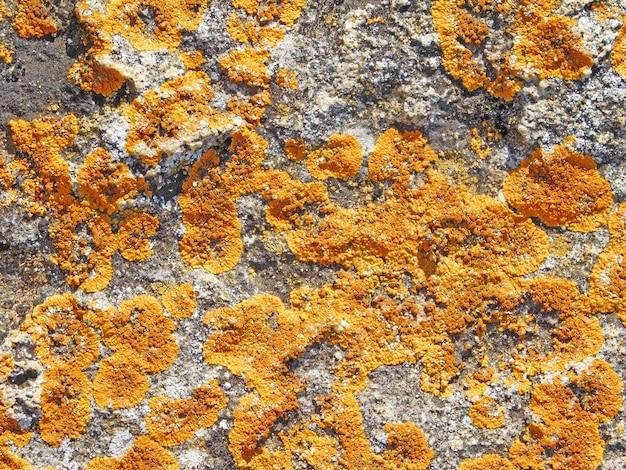 Steinstruktur mit moos