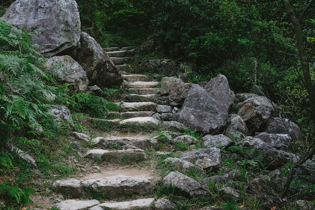 Steintreppen führen zum wald
