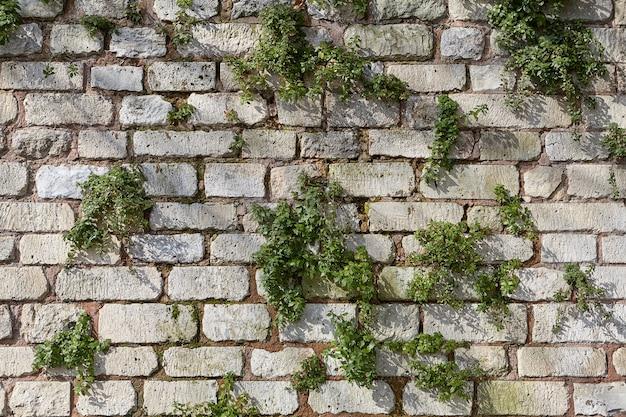 Steinzaun mit grünen büschen, abstrakte hintergrundtextur.