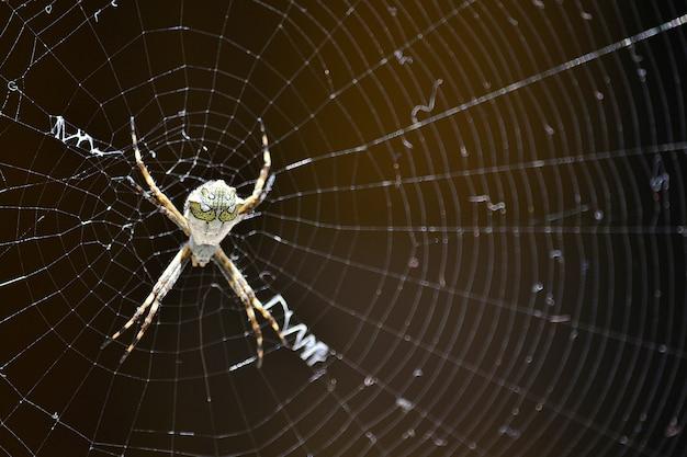 Sterblichen spinnennetz natur ziemlich