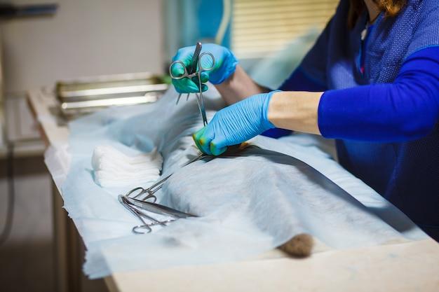 Sterilisation der katze auf operationstischen unter vollnarkose