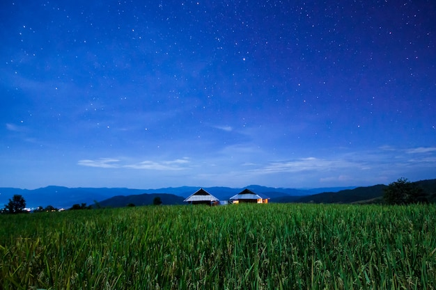 Sterne und weltraumstaub im grünen terassenförmig angelegten reisfeld in pa pong pieng