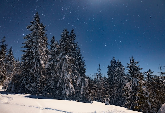 Sternenhimmel der schönen natur mit schneebedeckter tanne