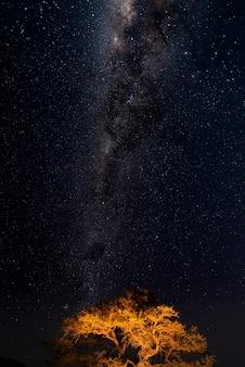 Sternenklarer himmel und milchstraße wölben sich, gefangen genommen von der grünen oase in der namibischen wüste, namibia, afrika.