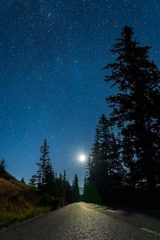 Sternennacht in der sommernacht, asphaltstraße zwischen den kiefernwald im hellen mondlicht.