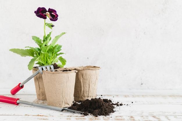 Stiefmütterchenblütenpflanze im torftopf mit boden und gartengeräten auf hölzernem schreibtisch