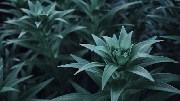 Stiel und blätter einer gartenlilie.