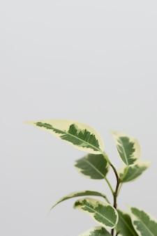 Stillleben anordnung der grünen pflanze