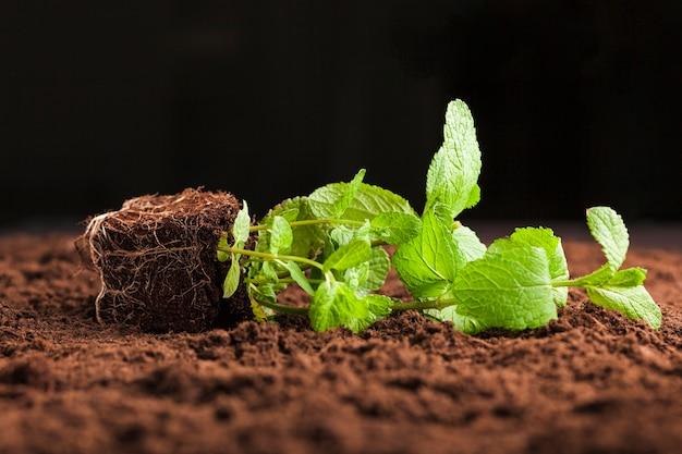 Stillleben der pflanze auf dem boden
