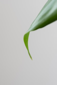 Stillleben grüne pflanze drinnen