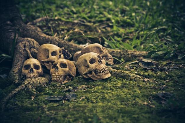 Stillleben mit menschlichem schädel an den wurzeln