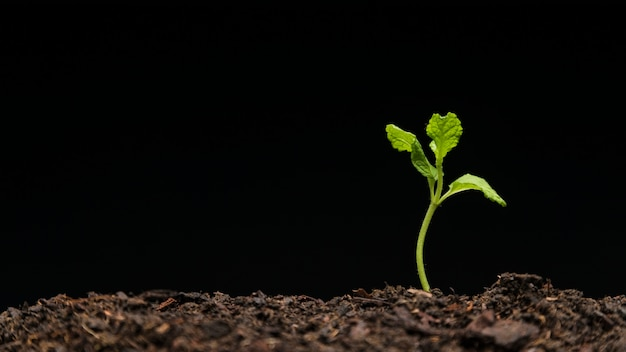 Stillleben mit wachsenden sämlingen