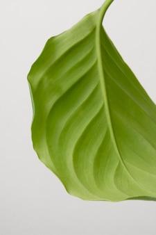 Stillleben-sortiment der grünen zimmerpflanze