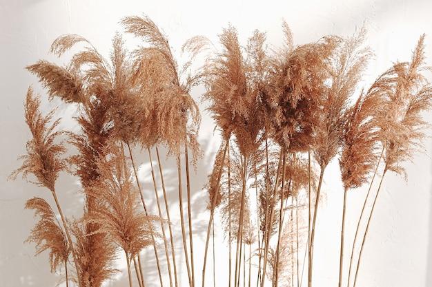 Stillleben vieler trockener herbstpflanzen vor einem weißen wandhintergrund
