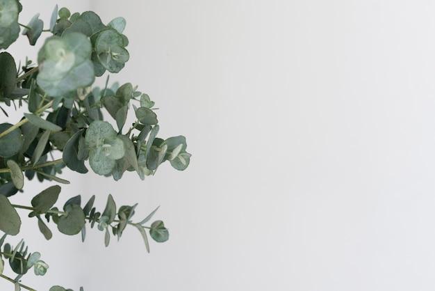 Stillleben zusammensetzung der grünen pflanze drinnen
