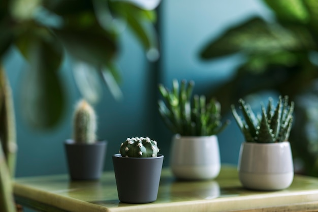 Stilvolle blumenkomposition mit schönen pflanzen, kakteen und sukkulenten im design und hipster-töpfen auf dem couchtisch. natürliches wohnzimmer. grüne wände. hausgartenkonzept. vorlage.