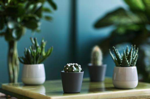 Stilvolle blumenkomposition mit schönen pflanzen, kakteen und sukkulenten im design und hipster-töpfen auf dem couchtisch. natürliches wohnzimmer. grüne wände. hausgartenkonzept..