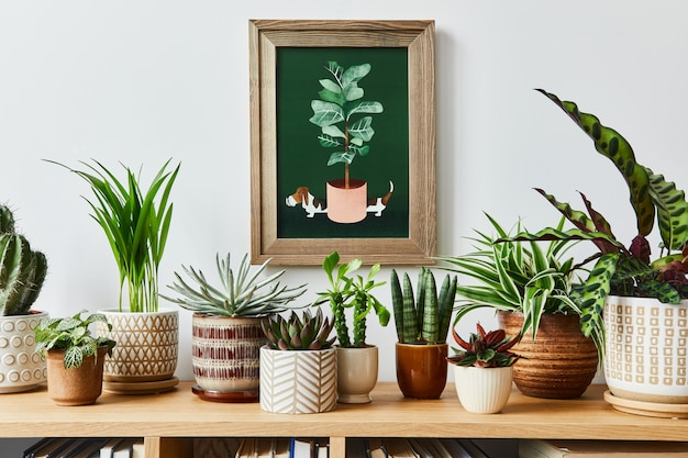 Stilvolle komposition des hausgarten-interieurs mit rahmen, gefüllt mit vielen schönen pflanzen, kakteen, sukkulenten, luftpflanzen in verschiedenen designtöpfen. hausgartenkonzept.