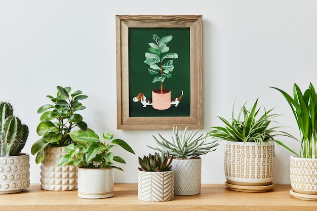 Stilvolle komposition des hausgarteninterieurs mit rahmen, gefüllt mit vielen schönen pflanzen, kakteen, sukkulenten, luftpflanzen in verschiedenen designtöpfen. hausgartenkonzept..