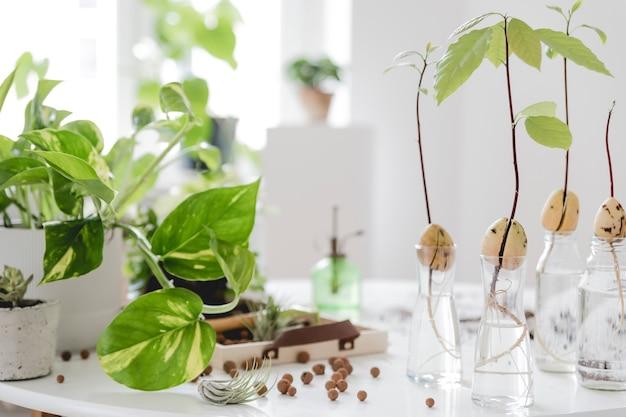 Stilvolle und botanische komposition des heimischen innengartens frühlingsblüten-vorlage
