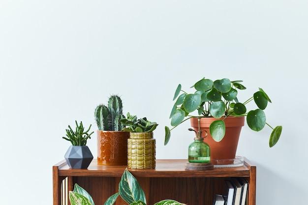 Stilvolle zusammensetzung des innenraums des hausgartens mit vielen schönen pflanzen kakteen sukkulenten luftpflanze in verschiedenen designtöpfen