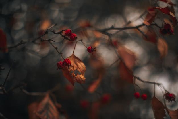 Stimmungsvolle herbstliche trockene baumblätter mit roten waldbeeren herbstsaison herbstkonzept