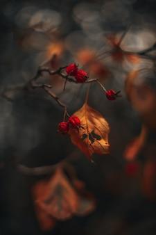 Stimmungsvolle herbstliche trockene baumblätter mit roten waldbeeren oktober hintergrund herbstsaison textfreiraum