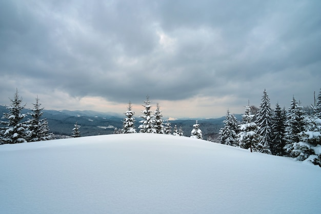 Stimmungsvolle landschaft mit kiefern bedeckt mit frisch gefallenem schnee im winterbergwald am kalten, düsteren abend.