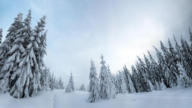 Stimmungsvolle winterlandschaft des fichtenwaldes kauerte mit tiefweißem schnee in kalten gefrorenen bergen.