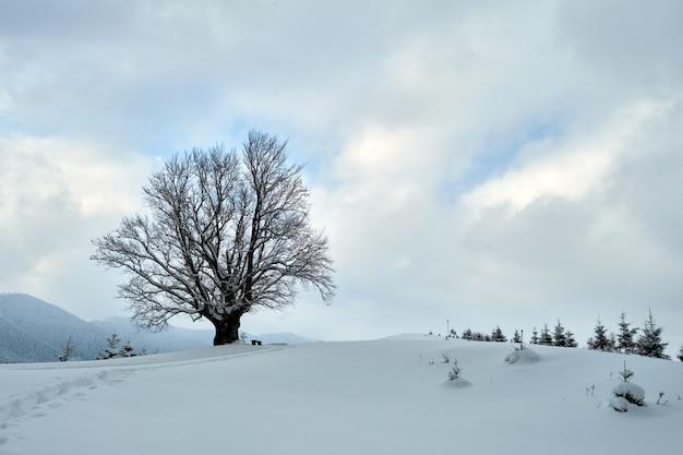 Stimmungsvolle winterlandschaft mit dunklem kahlen baum auf bedeckt mit frisch gefallenem schneefeld in winterlichen bergen an kalten, düsteren tagen.