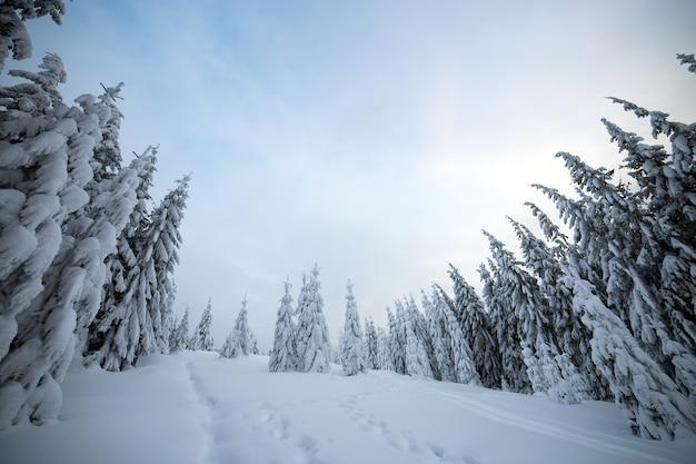 Stimmungsvolle winterlandschaft mit fichtenwald kauerte mit weißem schnee in kalten gefrorenen bergen.