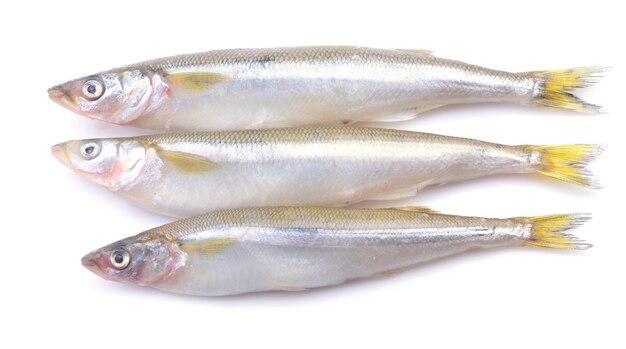 Stint fisch auf weißem hintergrund