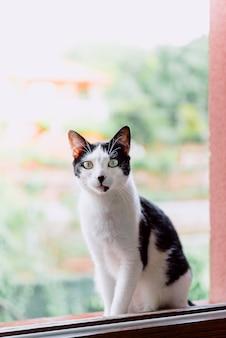 Stock fotografie schwarz und weiß europäische rasse katze thront auf fenster mit natur