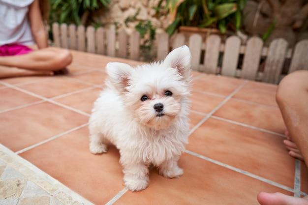 Stockfoto eines kleinen hundes, der mit aufmerksamem ausdruck und mit zwei kindern an den seiten vor der terrasse wartet. haustiere und familie