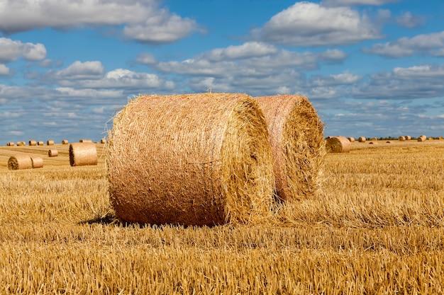 Stoppeln aus roggen auf einem ländlichen feld