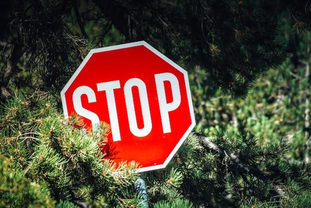 Stoppschild in einem wald