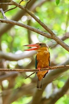Storch-berechneter eisvogel, der auf baumast mit grünem bokeh hintergrund, thailand hockt