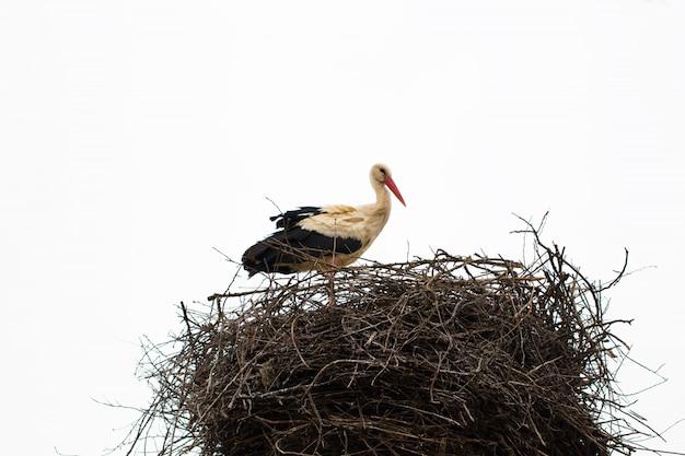 Storch, der in seinem nest bei warmem wetter steht