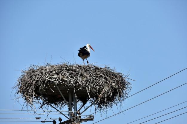 Storch im nest am strommast mit straßenlaterne