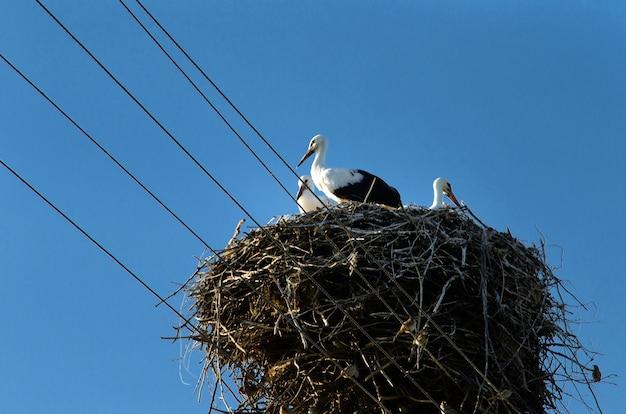 Storch kehrt in den frühlingsmonaten in ihre nester zurück