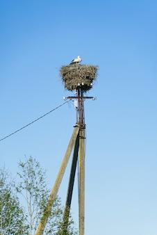 Storchfamilie, die auf der betonsäule nistet - getrennt auf blauem himmel