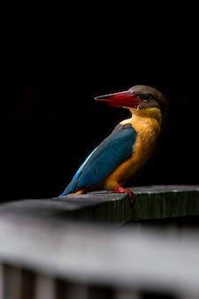 Storchschnabel-eisvogel hockt auf der holzbrücke