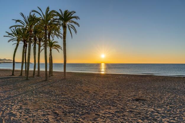 Strand der stadt villajoyosa mit palmen bei sonnenaufgang