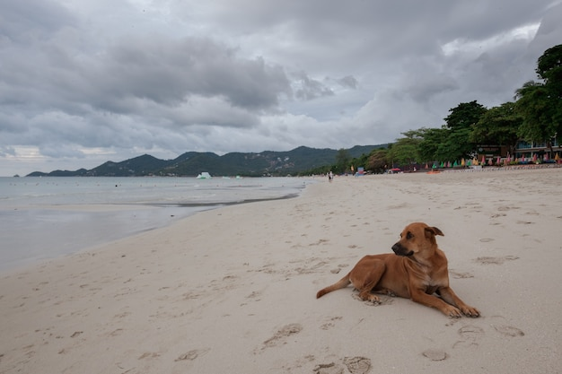Strand der tropischen insel. der hund auf sand, wolken.