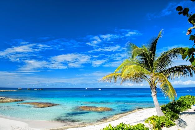 Strand. küste mit weißem sand, grünen palmen und türkisfarbenem meer oder meerwasser an einem sonnigen tag auf bewölktem hintergrund des blauen himmels. sommerurlaub und urlaub. luxusresort. paradies